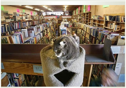 Resident Cat at Acres of Books